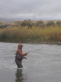 Wyoming Guided Wade Fishing Trips