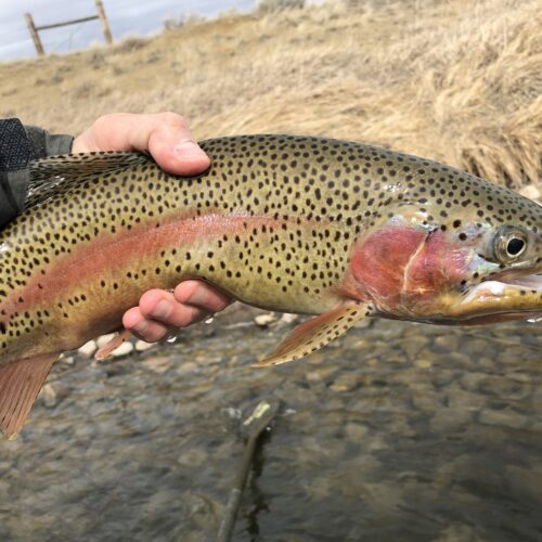 Miracle Mile Fishing Report